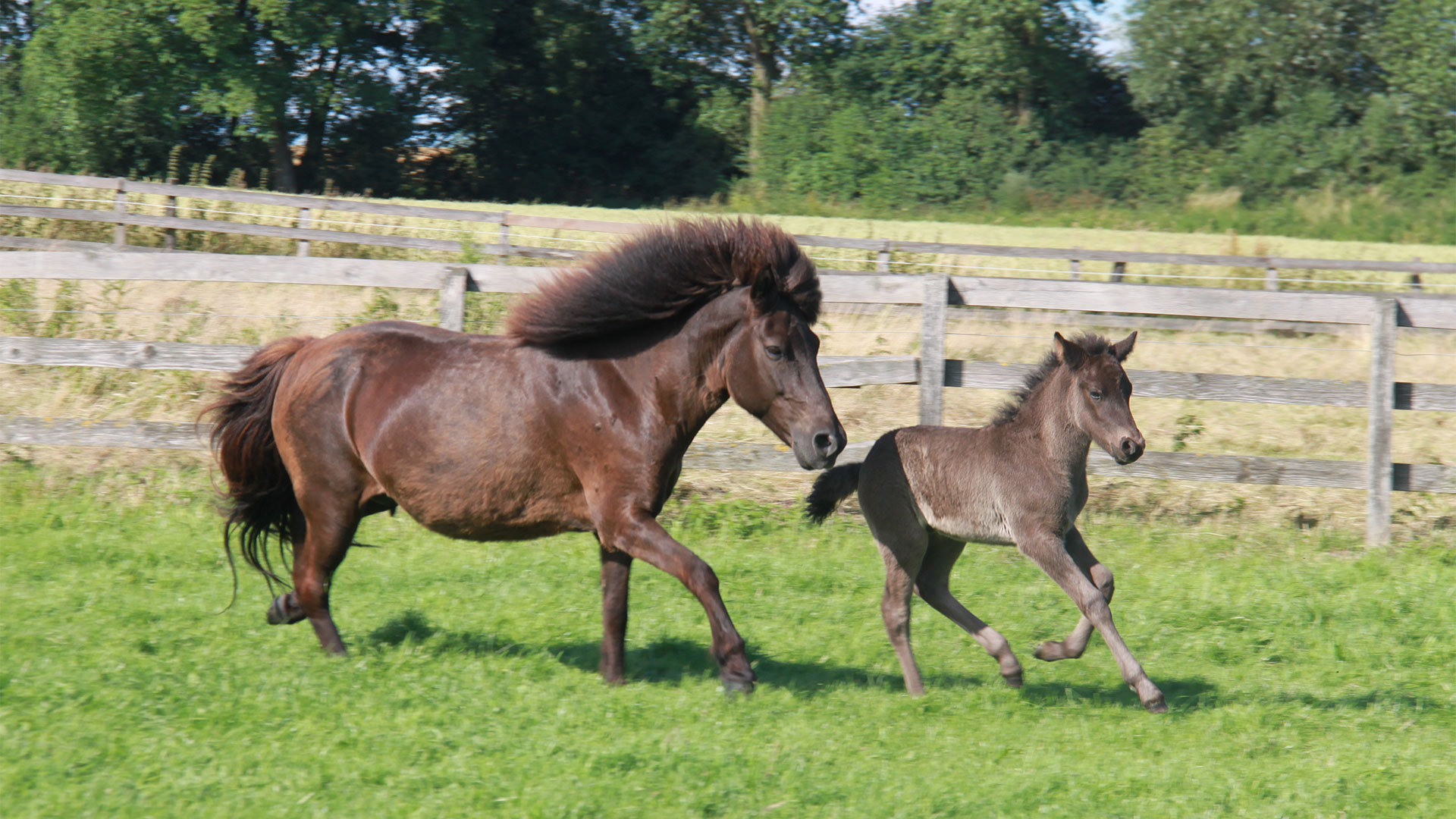 reining_pferde2